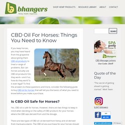 CBD Oil For Horses: Things You Need to Know