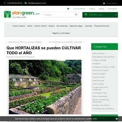 Qué hortalizas se pueden cultivar todo el año