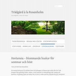 Hortensia – blommande buskar för sommar och höst – Trädgård à la Rosenholm