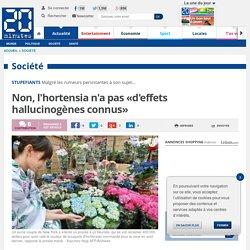 Non, l'hortensia n'a pas «d'effets hallucinogènes connus»