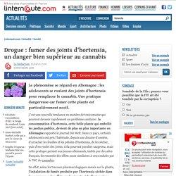 Drogue: fumer des joints d'hortensia, un danger bien supérieur aucannabis