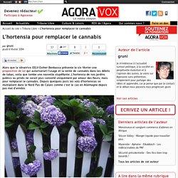 L'hortensia pour remplacer le cannabis