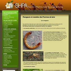 Ravageurs et maladies des Pommes de terre