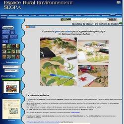 Etude de la plante - Un herbier de feuilles