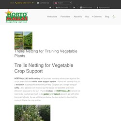 Trellis Netting - HORTOMALLAS™, supporting your crop