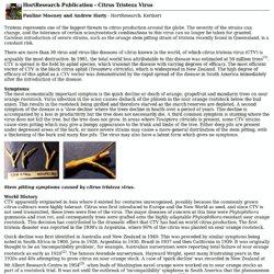 HortResearch Publication - Citrus Tristeza Virus