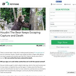 texte de la pétition: Houdini The Bear Keeps Escaping Capture and Death