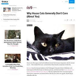Why House Cats Generally Don't Care (About You)