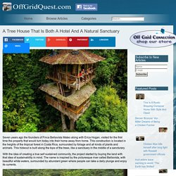 A Tree House That Is Both A Hotel And A Natural Sanctuary