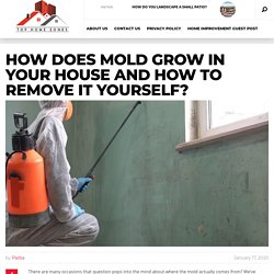 How Does Mold Grow in Your House and How to Remove it Yourself?