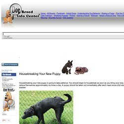 Housebreaking a Dog or Puppy
