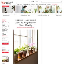Happier Houseplants: How To Keep Indoor Plants Healthy — Apartment Therapy's Home Remedies
