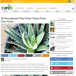 20 Houseplants To Clear Toxins From The Air In Your Home!