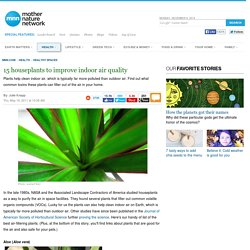houseplants improve indoor air quality