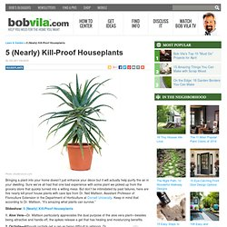 Five (Nearly) Kill-Proof House Plants
