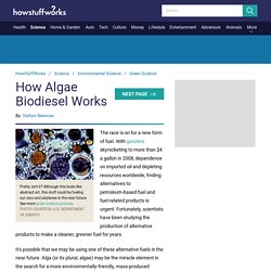 How Algae Biodiesel Works