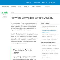 How the Amygdala Affects Anxiety