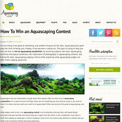 How To Win an Aquascaping Contest
