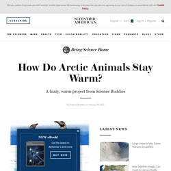 Scientific American: How do Arctic animals stay warm?