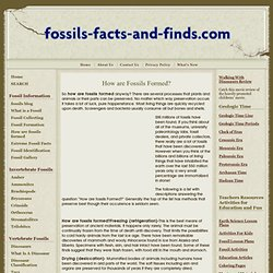 How are Fossils Formed?