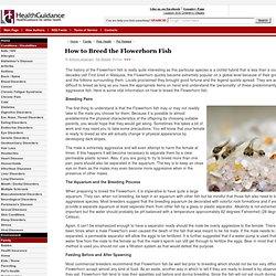 Flowerhorn | Pearltrees