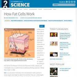 How Fat Cells Work""