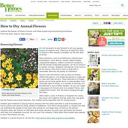 How to Dry Annual Flowers
