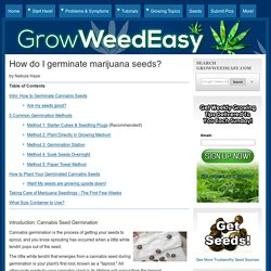 How do I germinate marijuana seeds?