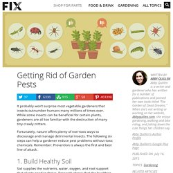 How to Get Rid of Common Garden Pests