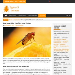 How to get rid of Fruit Flies in the Kitchen