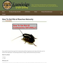 How To Get Rid Of Roaches Naturally Without Chemicals