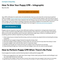 How To Give Your Puppy CPR - Infographic | Carrington.edu