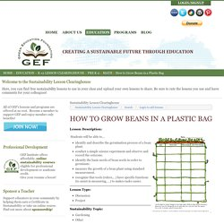 How to Grow Beans in a Plastic Bag