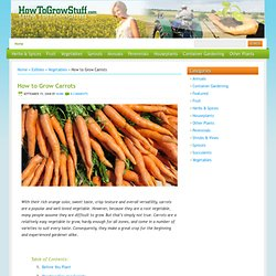How to Grow Carrots | How To Grow Stuff