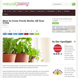 how-to-grow-fresh-herbs-all-year-long