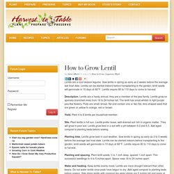 How to Grow Lentil - Harvest to Table
