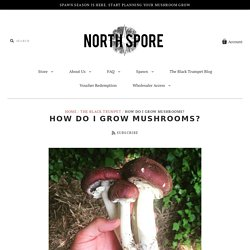 How do I Grow Mushrooms? – North Spore