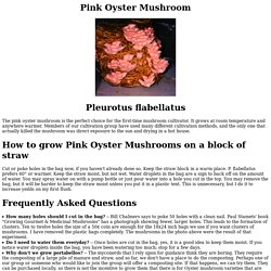 How To Grow Pink Oyster Mushrooms