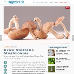 How to Grow Shiitake Mushrooms
