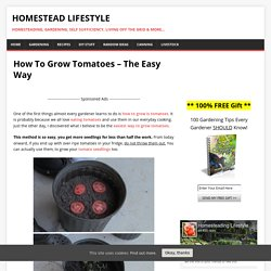 How To Grow Tomatoes – The Easy Way