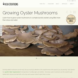 How To: Growing Oyster Mushrooms