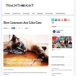 How Learners Are Like Cats