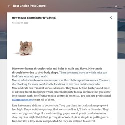 How mouse exterminator NYC Help?