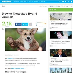 How to Photoshop Hybrid Animals