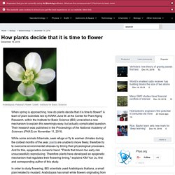 How plants decide that it is time to flower