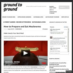 How to Prepare and Eat Mealworms