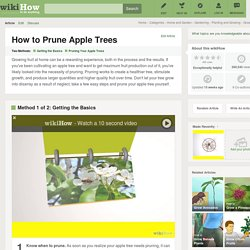 How to Prune Apple Trees: 12 Steps