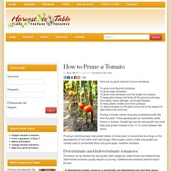 How to Prune a Tomato - Harvest to Table