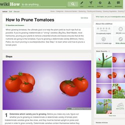 How to Prune Tomatoes: 5 Steps
