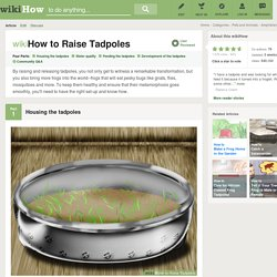 How to Raise Tadpoles: 12 Steps
